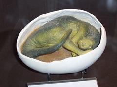 2008.09.10-031 embryon de dinosaure