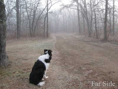 Chance Oct 27  Fog and Frost
