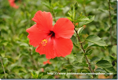7 Polynesian Flower