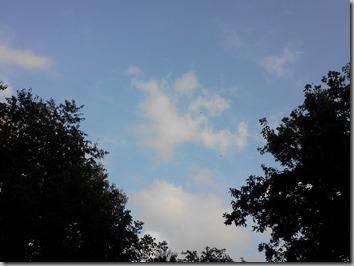 Nutwood sky 9-13