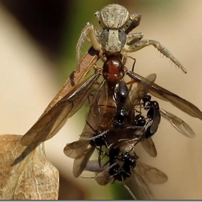 O poder do feromônio no mundo dos insetos