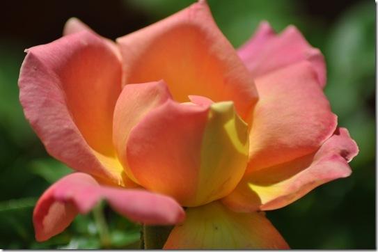 06-08-13 flowers 04