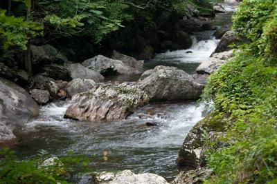 TN SMNP Little River 1