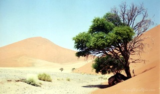 lonely-tree-in-namibian-desert
