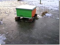potopa včeliček 20,02,2012 037