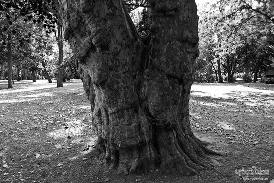bw_20110828_tree