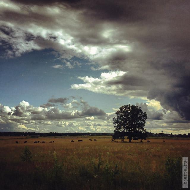 iPhone 4S & Instagram. Прагулкi па Беларусi