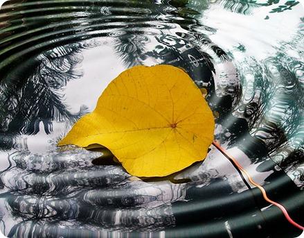 2012 ligero hoja en el agua disfrutando flotar