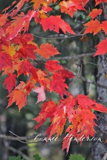 Beautiful leaves Sept