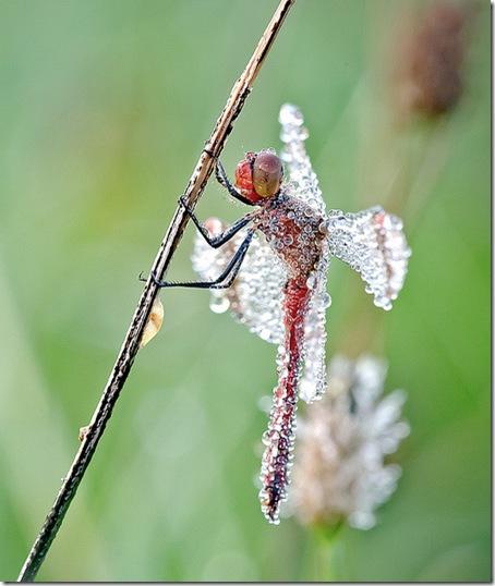 insecte - picaturi de ploaie