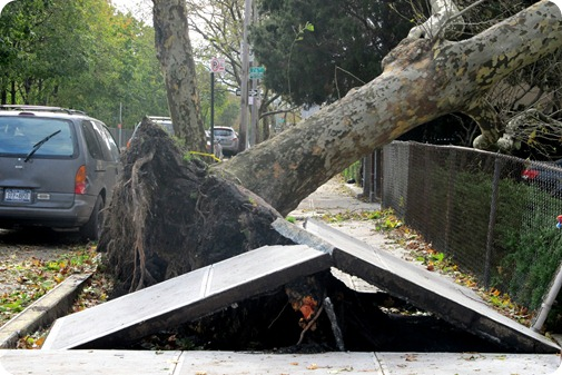 NYC Damage from Hurricane Sandy