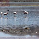 Arica - Parque Nacional Lauca  (44 de 48).jpg