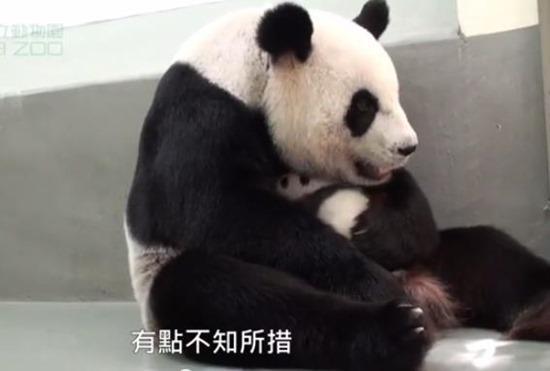 Bebê Panda Gigante 07