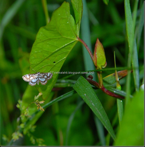 makkarakoski perhonen 055