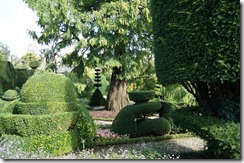 Levens Hall topiary 1