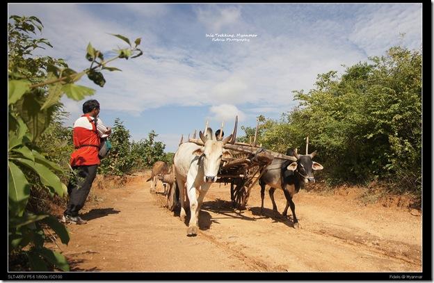 Myanmar415