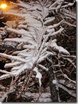 paisajes nevados (62)