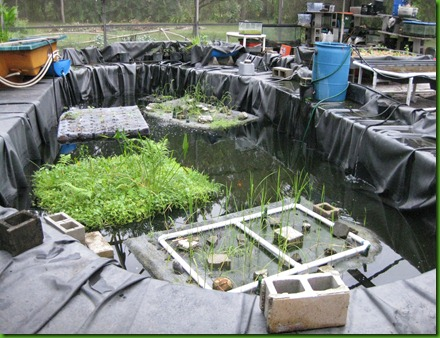 Aquaponics Garden Design find this pin and more on aquaponics garden design This Aquaponics System Is A Sustainable Project That I Had The Pleasure Of Seeing As A Student Of The Orlando Permaculture Design Course