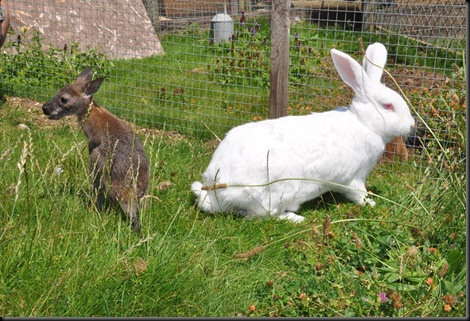 Henry & Mr Fluffy completely ignoring each other! DSC_0401