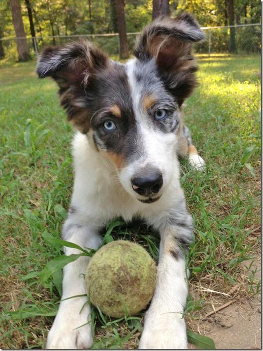 dora tennis ball
