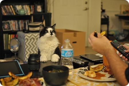 Brooks begging for scallops