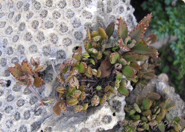 10-03-mom-brain-coral
