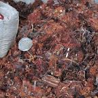 廢紅銅-廢電線銅(馬達線).jpg