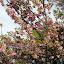 Spring Has Sprung - Akaroa, New Zealand