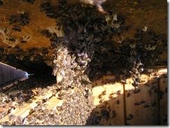 včelky a med květen 137