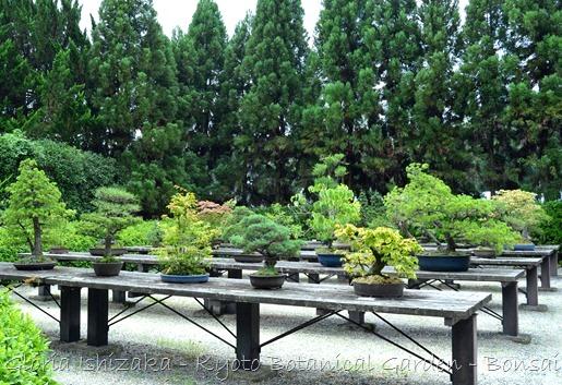 Glória Ishizaka -   Kyoto Botanical Garden 2012 - 40_thumb[3]