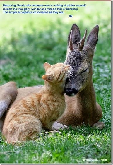 friendship glory