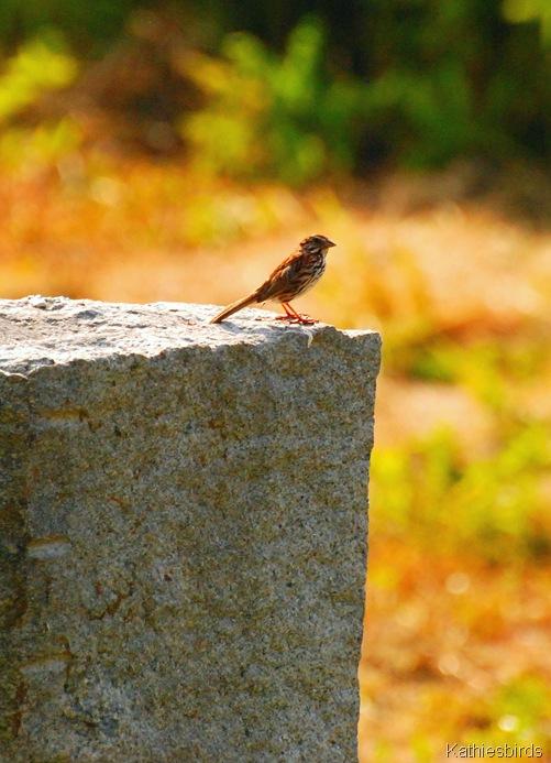 21. sparrow-kab