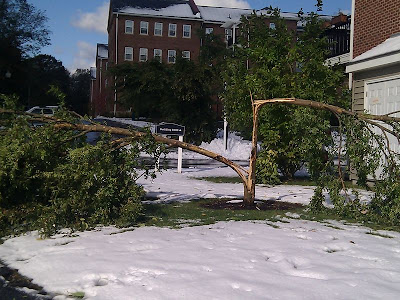 雪の重みで折れた木