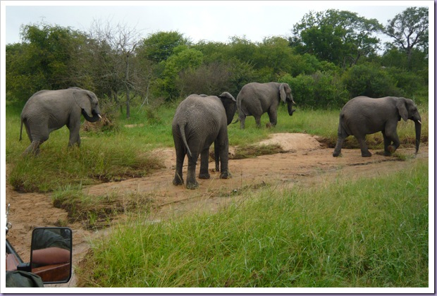 Hoedspruit-África-do-Sul-Safari-Game-Drive-Elefantes