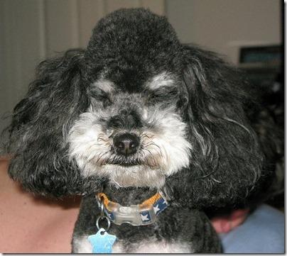 fotos gradiosas de perros capitanpalomo (12)