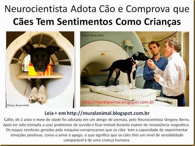 Neurocientista Adota Cão e Comprova que Cães Tem