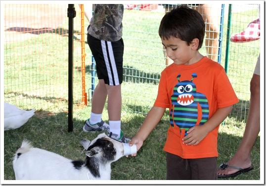 petting zoo IMG_9520