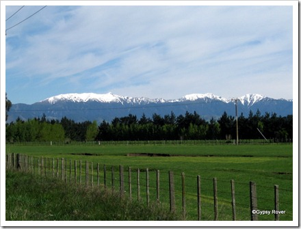 Snow capped Ruahine ranges.