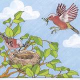 pájaros 001.jpg