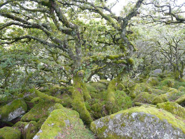 spirituele-reis-dartmoor-engeland-51.JPG