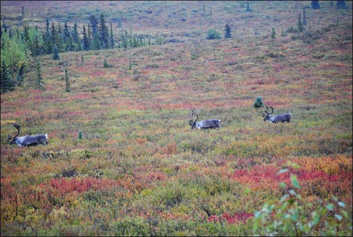 2013_08_Alaska 1204