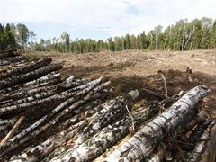 Цаговский лес пилят