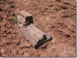 2012-04-15 Petrified Wood, Fry Canyon, UT (31)