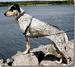 a - bandido posing on rocks