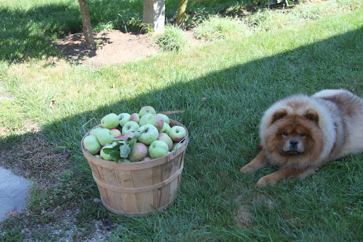Uncle Carlos told me that Martha asked him to pick a bushel of apples and bring it to the TV show.