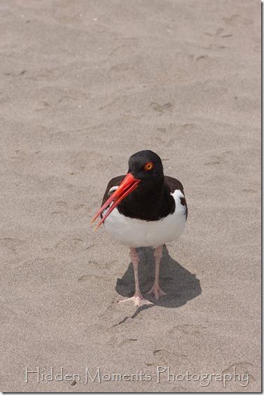Beach Bird 3_sm