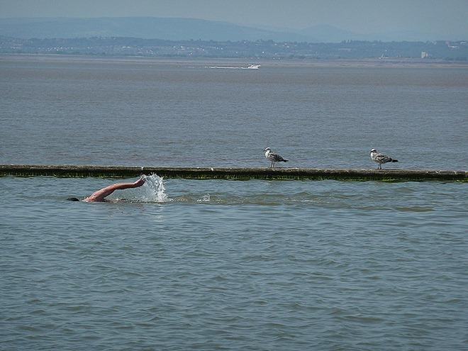 Кливдонские чайки меланхолично наблюдают за рассекающим водную гладь пловцом