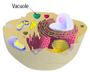 struktur sel manusia