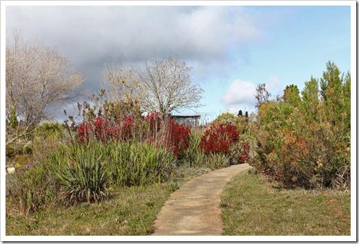 120211_UCSC_Arboretum_253