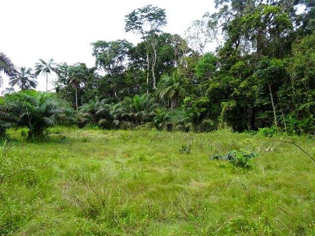 Forêt équatoriale (5)